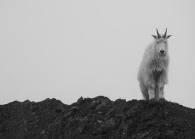 Mountain Resident