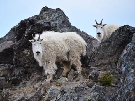 Mountain Residents