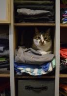 Closet/cat cubby