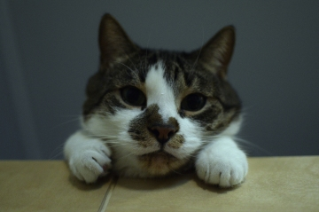 loft cat