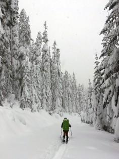 Oregon back country. December, 2016